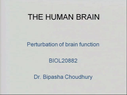 Preview image for video: The Human Brain 21.3.11