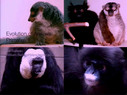 Preview image for video: Evolution of Animals.